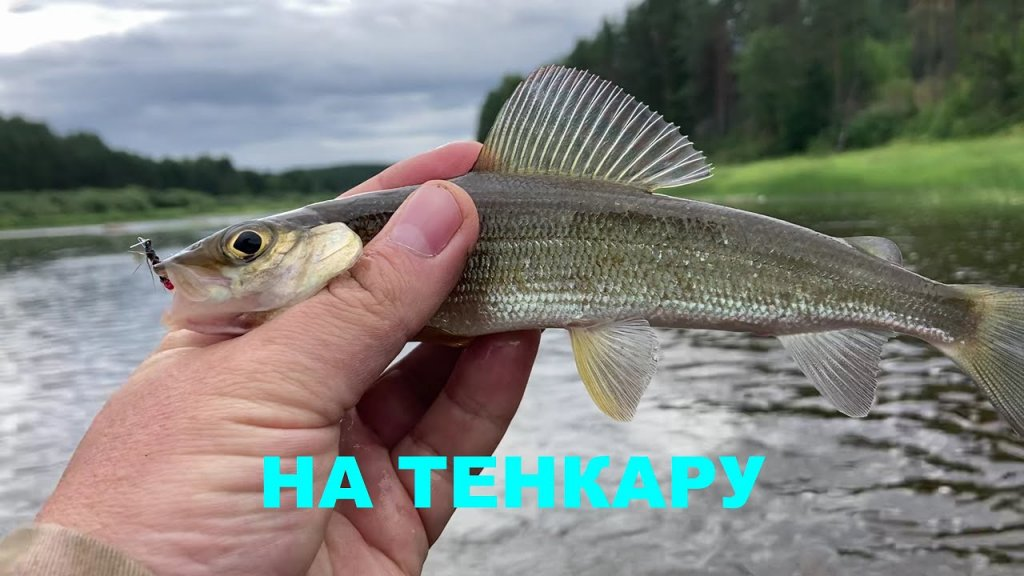 Новое место Разведка после жары  Тенкара#velskii_hook#tenkara
