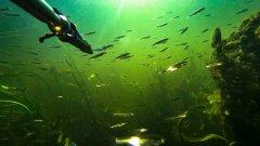 ПОДВОДНАЯ ОХОТА на СОМА! Где искать рыбу на микроречке!