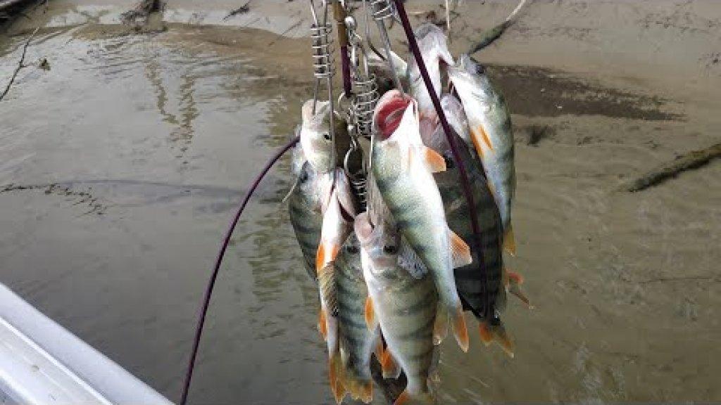 На эту оснастку всегда клюёт окунь.  Рыбалка на Оби с лодки.