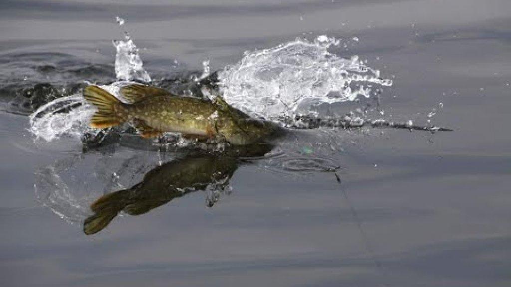 рыбалка  2021 на щуку август