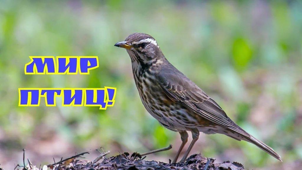 Наблюдения охотника! Мир птиц! Птенцы!