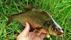 Рыбалка на поплавок  Погода и клёв рыбы