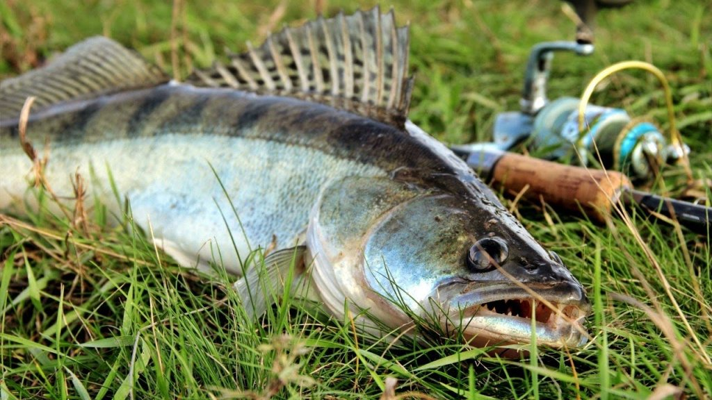 Лучшие уловы лета 2021 года. Летняя рыбалка 2021 года итоги.
