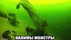 Стая налима. Плюсы подводной камеры