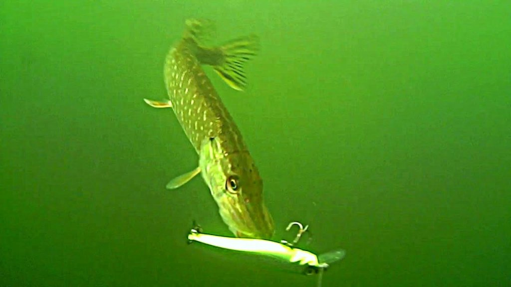ТАКОЕ РЕДКО УВИДИШЬ! Рыбалка на спиннинг! Подводная съемка