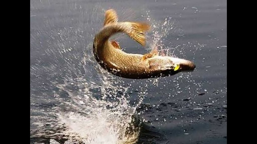 рыбалка на щуку на спиннинг 2021