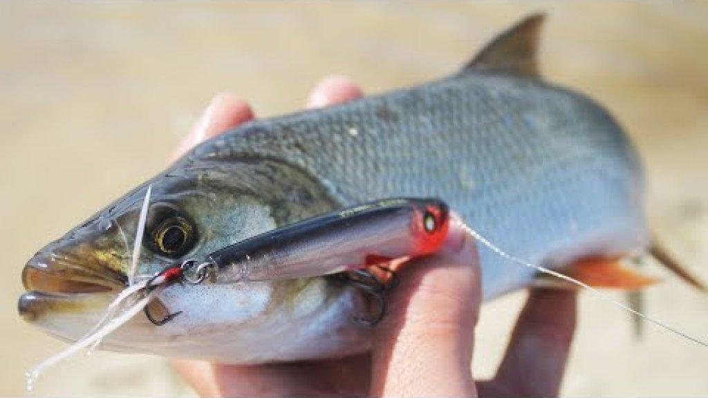 Ловля хищника на поппер / Осенняя рыбалка на спиннинг с берега