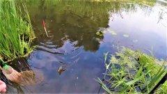 Рыбалка на течении Лучшая насадка для ловли