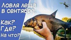 Рыбалка на фидер. Ловля леща в сентябре. Что нужно знать, чтобы поймать?