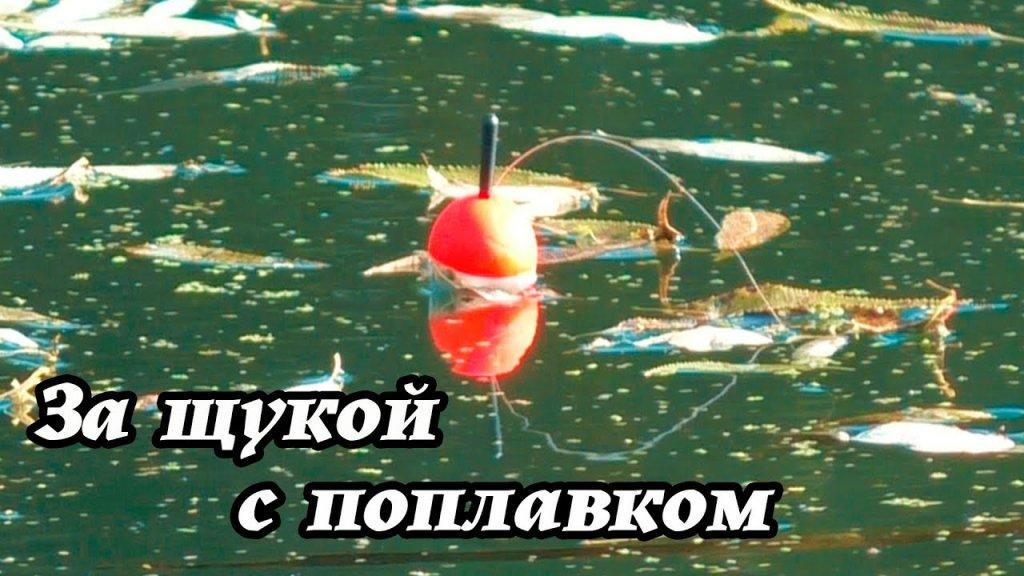 Поймать щуку на поплавок в коряжнике на живца. Оснастка для ловли на живца.