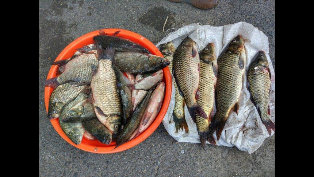 Карась и сазан на кукурузу, облепиху, рябину.....лучшая рыбалка часть 1-я