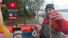 Поездка на рыбалку за 1000 км. Богучанское водохранилище. Рыбалка на спиннинг