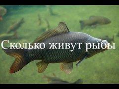 Сколько живут рыбы в диком водоёме?