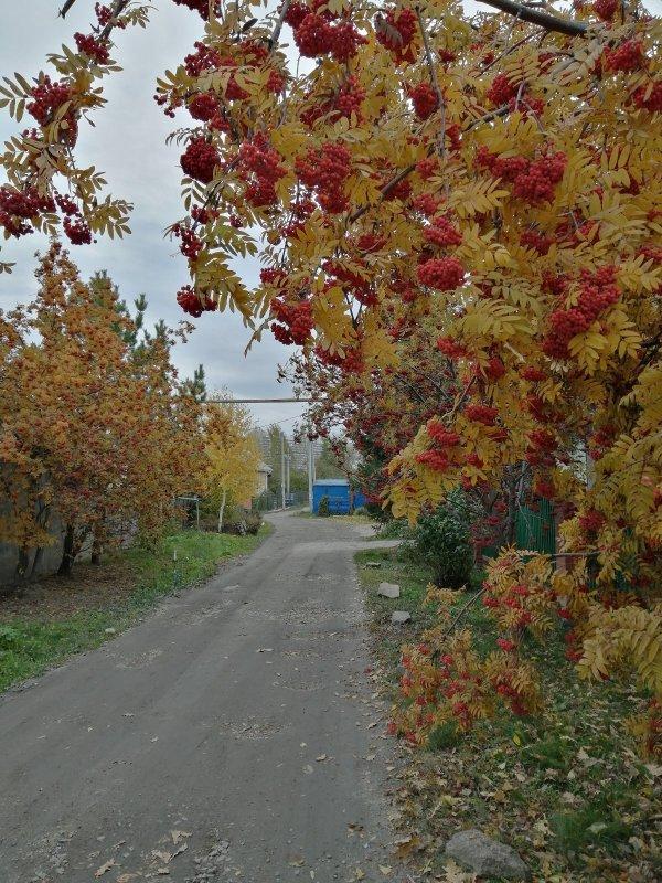 Дорога к озеру.