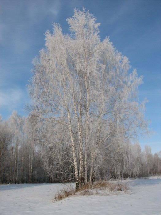 Утро туманное. Тогучинский р-н, 03.11.2007г.