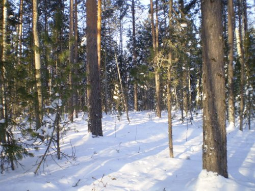 Январский пейзаж