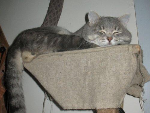 Охотничий кот Ануй. Нашли котенка в 2005г. в поле на берегу одноименной речки.