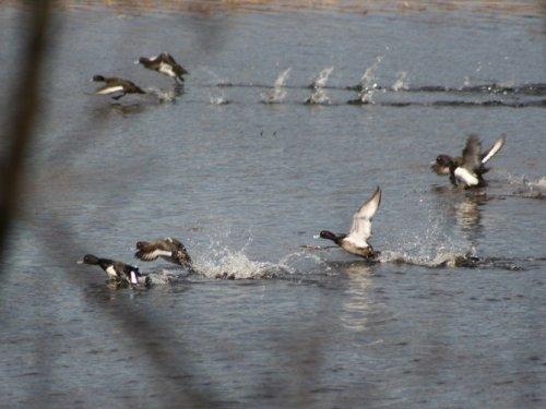 Весна 2008 (конец весеннего сезона охоты).