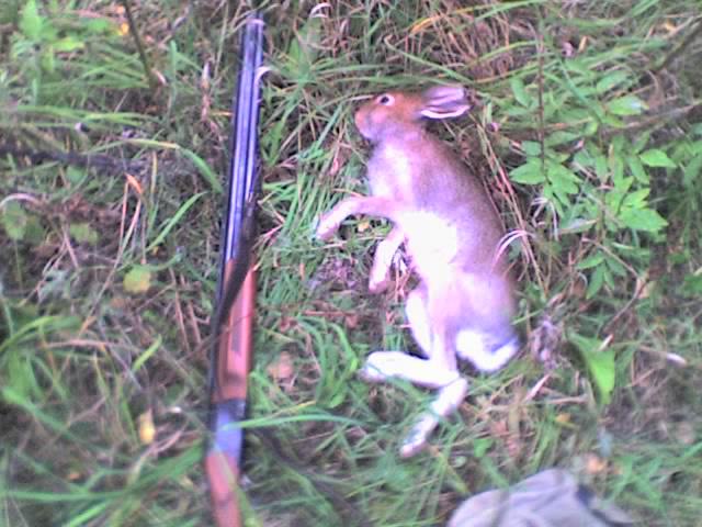 первй заяц