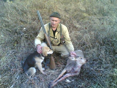 Короткая охота на косулю