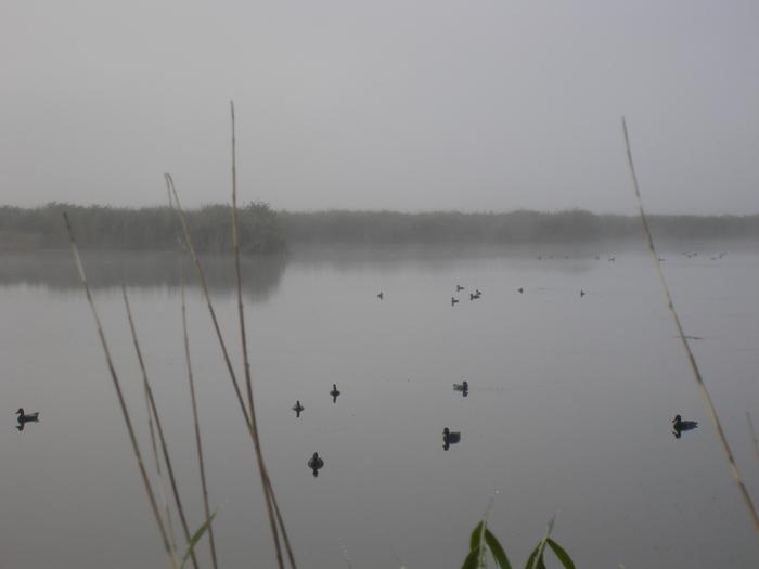 Открытие 2008. Туман почти рассеялся.