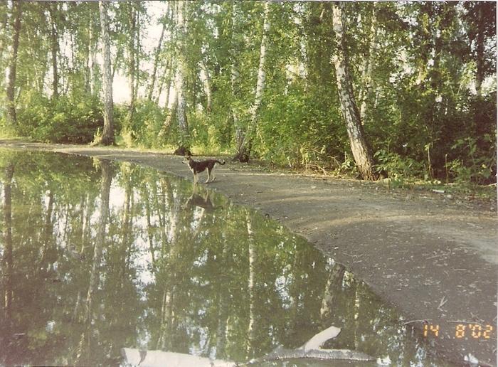 мой молодой пес