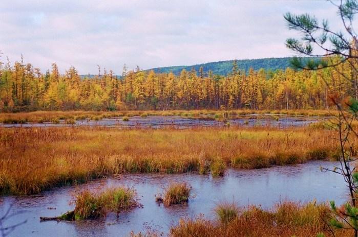 Озерцо на моховом болоте