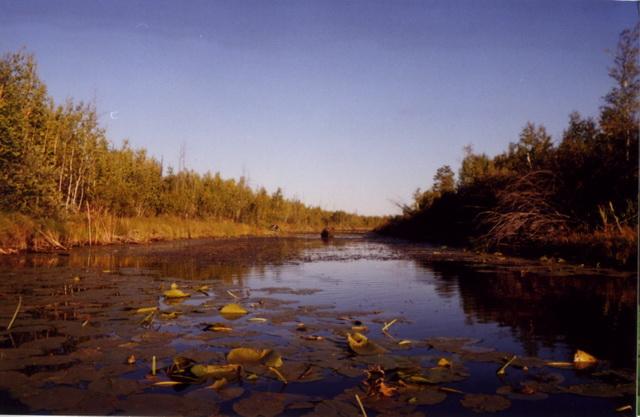 речка Еланка, протекает через рям