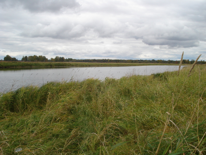 Озерья рядом с р.Чулым