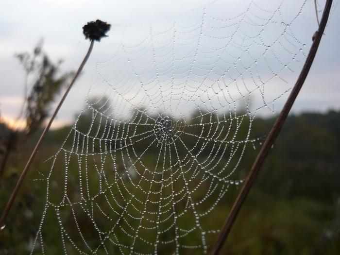 паучьи сети