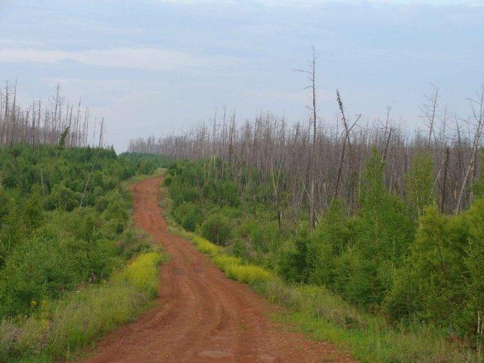 мертвый лес