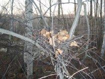 Осень пришла.. гнездо опустело...