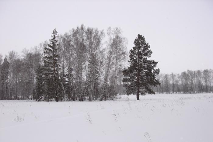 Скорей бы зиму, да на лыжах по снежку...