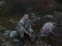 охота на марала в горах Алтая