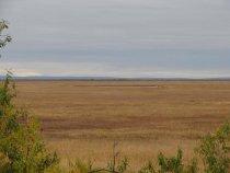 День второй. Вид с крыши. Гусиная тундра. Слева вулкан Шивелуч.