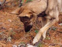 Старое фото. Собака давно в Лесах Счастливой Охоты...