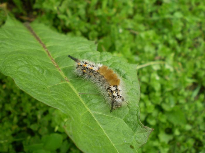 просто красивая гусеница