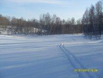 наш зимний сибирский лес