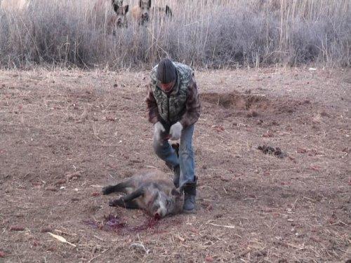 Охотничье хозяйство по казахски