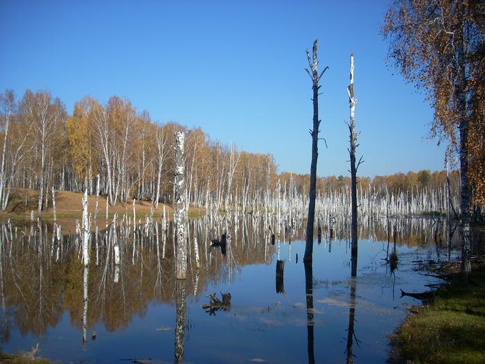 болото,как оно есть,без шопа