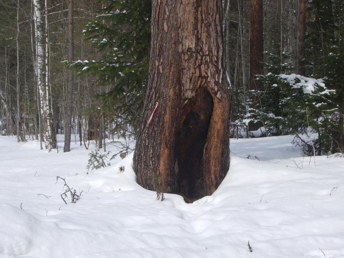 Наблюдает! Пустить или не пустить ...в лес?!