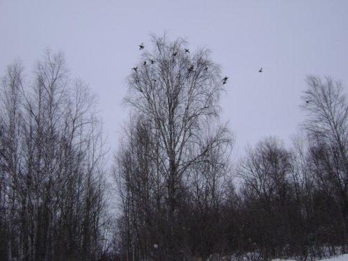 Подготовка к весенней охоте на гуся.