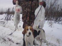охота в тимир тау.отец собака и три профессора