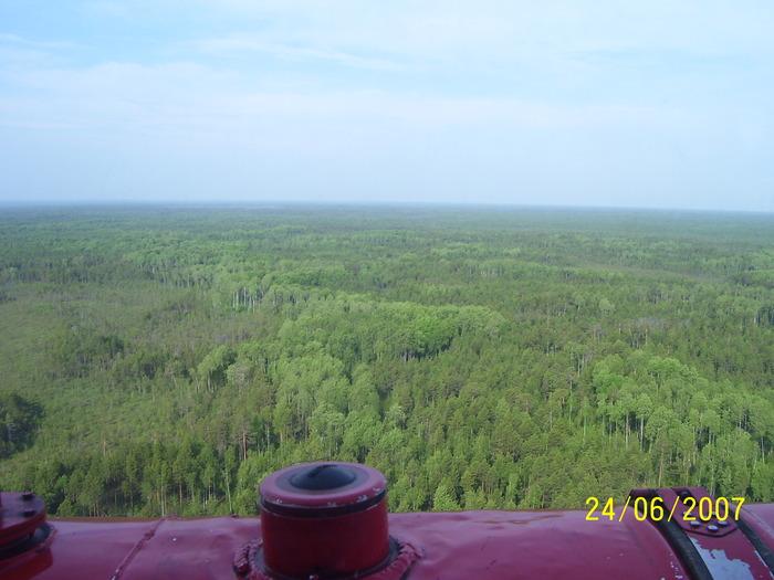 лес с вертухи