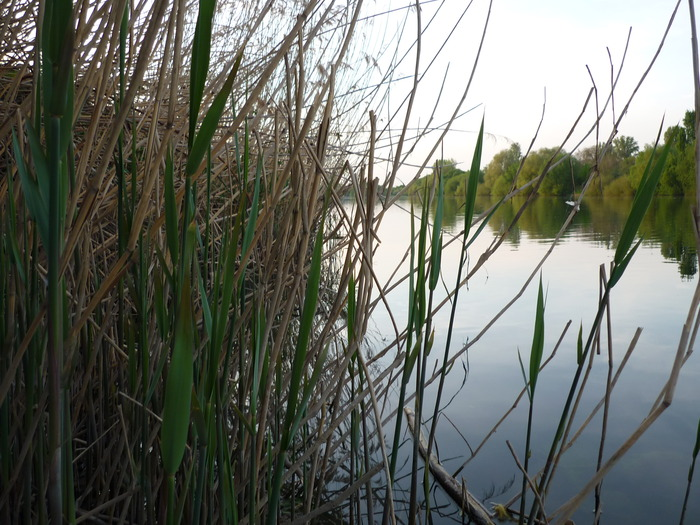 Тишина на озере.