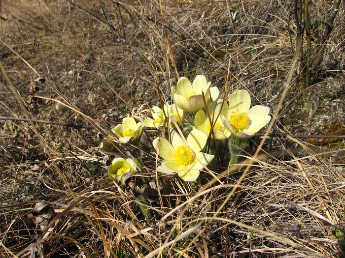 вот теперь верю что пришла весна!