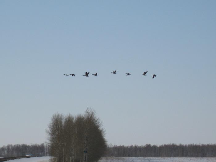 Хорошо летят!