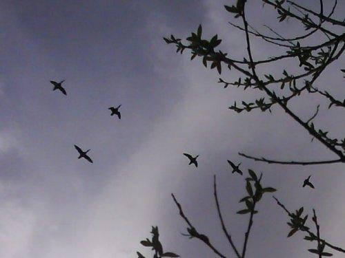 Шилки на перелете