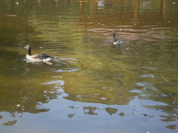 В зоопарке сделали озеро.