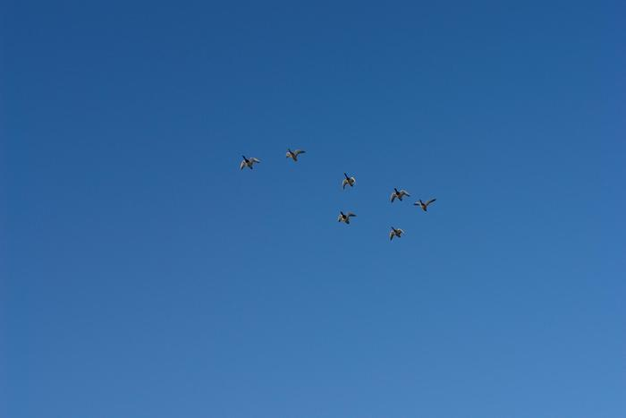 Летять утки:)